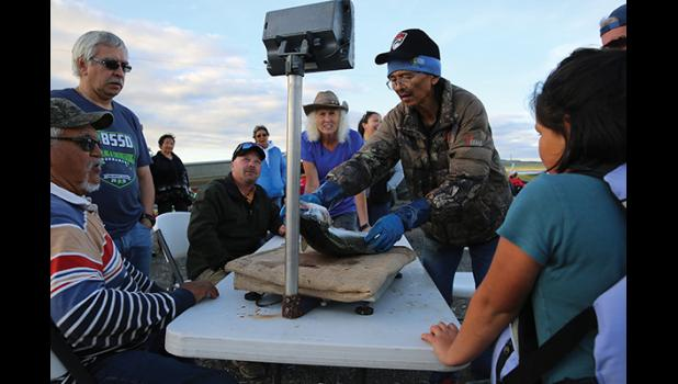 SILVER SALMON DERBY— Salmon derby officials Sam Towarak, Tony Haugen, Aaron Burmeister, Elaine Nisson and Sam Ivanoff weigh in Lilly Lusten-Katongan's  9.8 lb silver, which tied for first place.