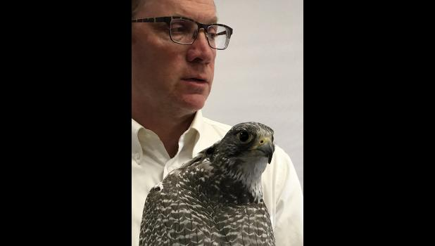 TINSEL—John Earthman brought Tinsel, the gyrfalcon he has kept for 20 years as a friend and hunter, to a session of Strait Science.