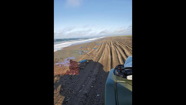 TRASH— On beaches across St. Lawrence Island, like this stretch near Gambell, plastic debris has been washing up in alarming amounts.