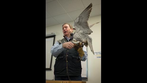 LOCAL SCIENCE— A falcon spreads her wings to keep her balance during John Earthman's presentation on falconry at the Western Alaska Interdisciplinary Science Conference held in Nome last week.